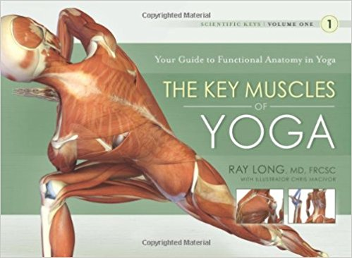 The Key Muscles of Yoga - Your Guide to Functional Anatomy in Yoga